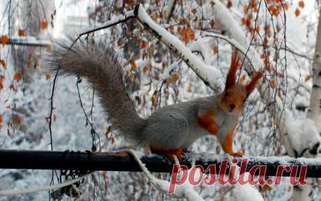 Новые фотографии природа зима.