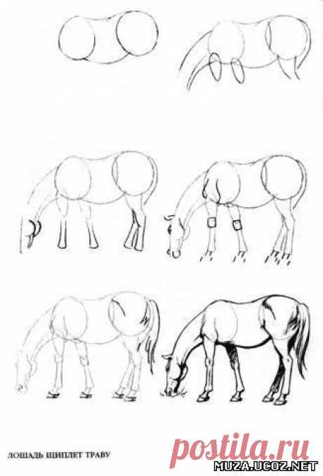 Учимся рисовать лошадь