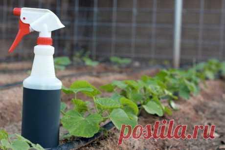 Скрытый резерв: водка. Нестандартное использование в домашнем хозяйстве