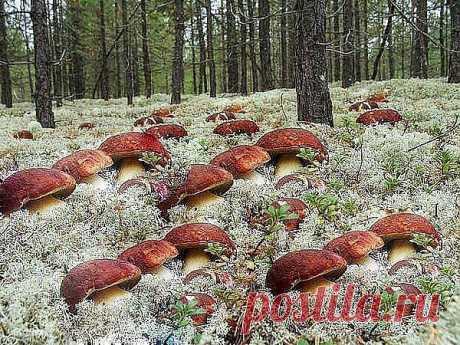 грибочки в лесу