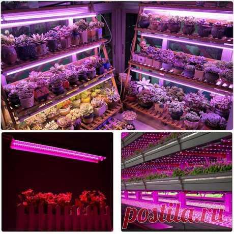Светодиодный светильник для выращивания рассады  Мощность: 500 W Размеры: 50*9*5 см Тип вилки: США/ЕС  https://s.click.aliexpress.com/e/bVuYwWo6?product_id=..  #светильник #рассада