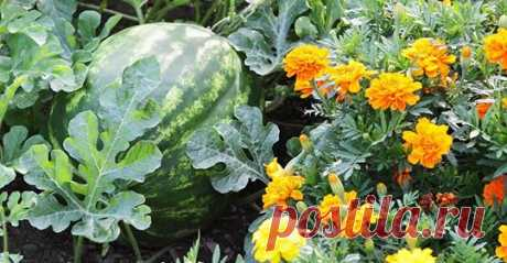Растения, которым полезно расти вместе — Полезные советы