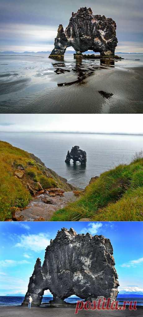 Туристы едут в Исландию, чтобы поплавать с динозавром