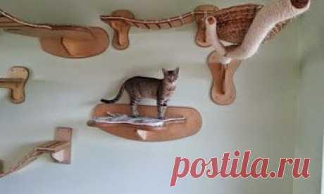 Игровая площадка для кошек в квартире (фото)