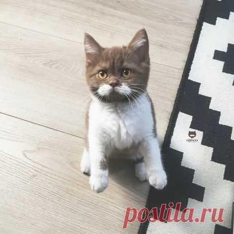 Котенок с идеальными усами - так решили небеса