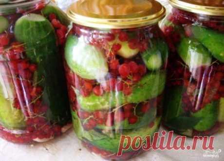 Los pepinos para el invierno con la grosella - poshagovyy la receta de la foto en Повар.ру