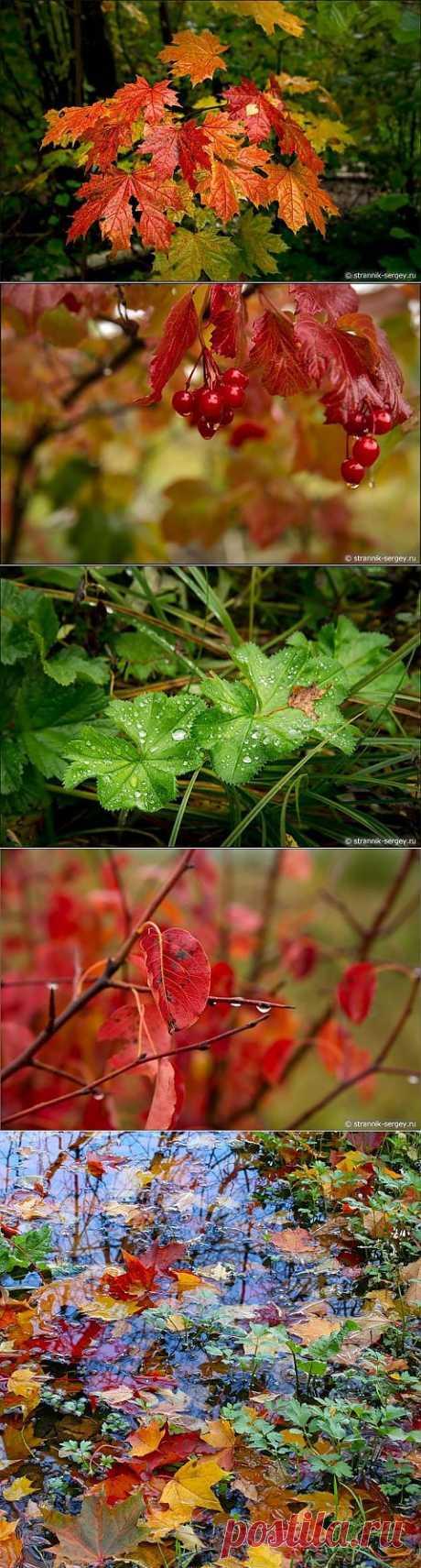 Дождливая осень | ЛЮБИМЫЕ ФОТО