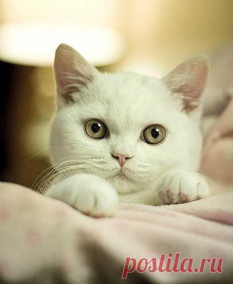 Milou | Flickr - Photo Sharing!