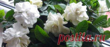 Какие комнатные растения можно использовать в лечебных целях