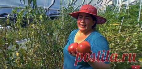 Йод, нашатырь, зеленка - в огороде! — Садоводка