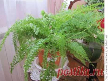 Комнатные растения: виды и уход - личный опыт выращивания комнатных растений