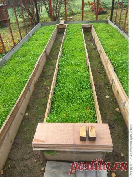Сидераты – зеленое удобрение для вашего участка