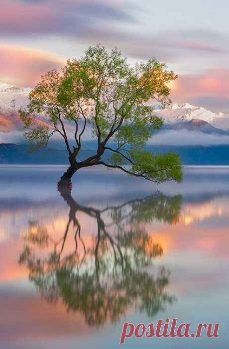 500px / Lake Wanaka by Karen Plimmer | Wonderful Tree-Forestscape | P…