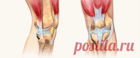 коленный сустав кости его образующие Коленный сустав: анатомия и физиология. Кости, связки, мышцы Один из сложнейших суставов человеческого тела - коленный. В данной статье простыи и понятным языком рассматривается анатомия коленного сустава, его особенности строения и физиологии.