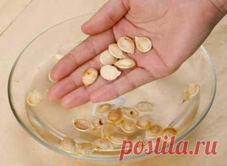 Семена – основа урожая. Правила и тонкости подготовки семян к посеву
