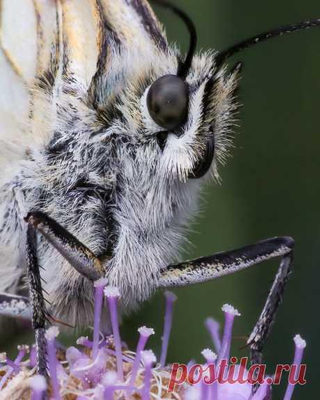 Пожужжим? 10 оригинальных макро снимков насекомых   Российское фото   Яндекс Дзен