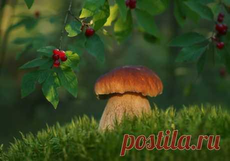 Фотография *** из раздела макро №6890268 - фото.сайт - Photosight.ru
