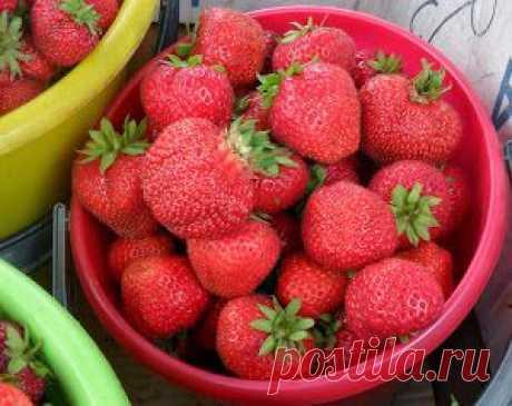 Вкусный Огород: Искусственное опыление растений