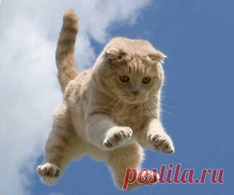 Смешной до боли рассказ про полёт кота Барсика Классный рассказ, будете хохотать до коликов. Браво автору. — «Рожденный ползать летает скверно»  Автор благодарит всех, кто не мешал ему при написании рассказа.    В прекрасном расположении духа, объ…