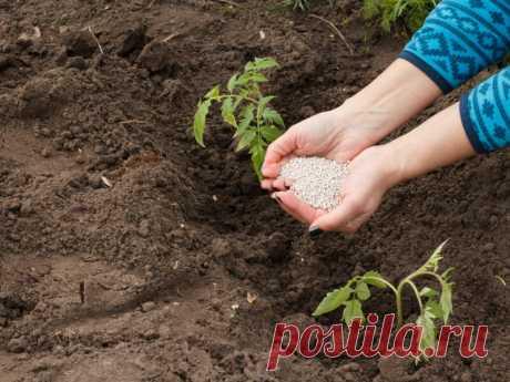 Мочевина — минеральное удобрение для помидоров   О Фазенде. Загородная жизнь   Яндекс Дзен