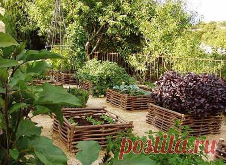 Идеи для огорода – овощи в клумбах