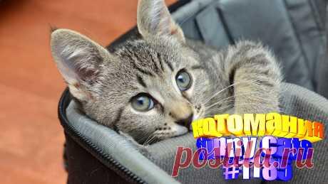 Вам нравится смотреть приколы про кошек? Тогда мы уверены, Вам понравится наше видео 😍. Также на котомании Вас ждут: видео кот,видео кота,видео коте,видео котов,видео кошек,видео кошка,видео кошки,видео о котах, видео про смешные, видео смешных кошек, кот видео, кошачьи приколы, кошка, милые, приколы котов, прикольные коты, с котами, смешно кошка, смешные видео про кошки, смешные приколы с животными, смешные про кошек, смотреть смешные кошки, приколы с котами с озвучкой до слез