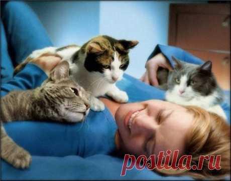 Кошки - домашние лекари - Полезное - ГОРНИЦА - дайджест новостей, авторские блоги