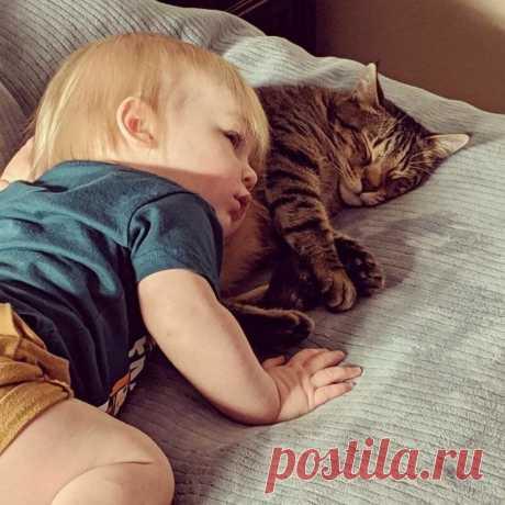 Дети и коты (18 фото) . Тут забавно !!!