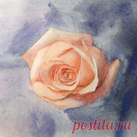 Рисуем розу акварелью