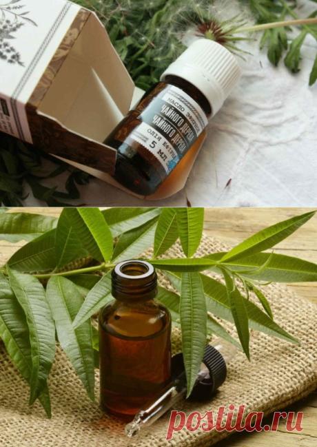 Масло чайного дерева - обойдемся без таблеток. Сильное средство от многих болезней