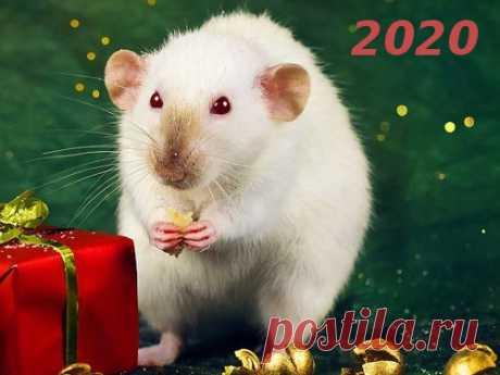 Гороскоп на2020 год погоду рождения Гороскоп на2020 год поможет вам пережить это время снаименьшими проблемами, атакже вприсутствии удачи. Чтобы получить важные советы отэкспертов, достаточно знать, какое животное является вашим покровителем.