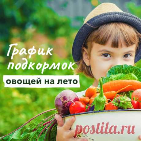 Los escarabajos útiles y nocivos en la huerta – la foto, hacer las descripciones que con ellos   las Enfermedades y los saboteadores (Огород.ru)