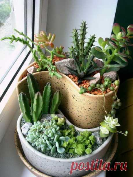 Красота кактусов и суккулентов в интерьере - Садоводка