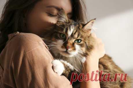 Бархатные коготки или пушистая бестия? Какая ты кошка— тест | WDAY