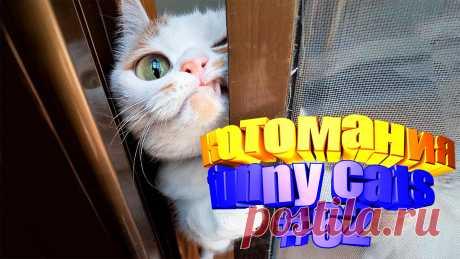 смешные коты видео, видео котов смешные, смешной кот видео, смешное видео кот, видео кот том, для котов видео, коты приколы видео, видео про кота, видео о котах, видео животные смешные, животное смешное, животные видео смешное, видео смешное животных, смешных животных, приколы котов, кот приколы, приколы котами, смешные коты, смешное видео кошки, кошка смешная, смешные про кошек, видео смешных кошек, кошка видео смешное, смешно кошка, смешно про кошек, смешные кошка, видео кошек, видео о кошках