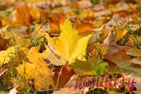 Осенний ералаш))  Снимал лежа)))
