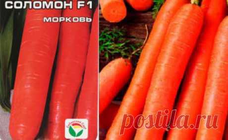 Много информации по сортам моркови и особенности её выращивания.