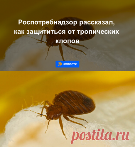 Роспотребнадзор рассказал, как защититься от тропических клопов - Новости Mail.ru