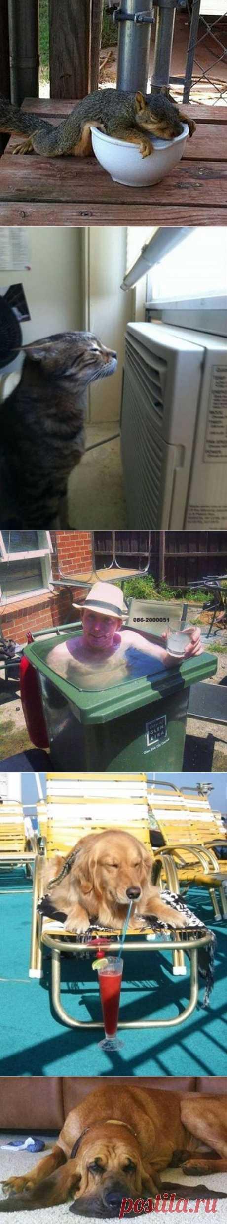 Летняя жара в смешных фотографиях...