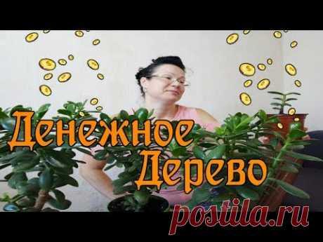 Как правильно сформировать денежное дерево / Формирую крону
