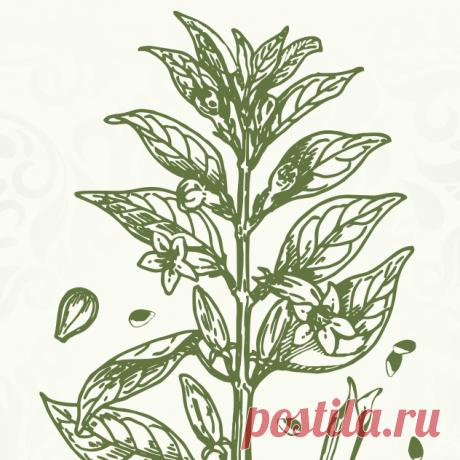 Купить Кунжутное масло по Лучшей Цене | Здоровое Питание Самые низкие цены на Кунжутное масло | Отзывы | Доставка в любую точку Украины | Магазин Здорового Питания | +380 (68) 432-35-54 приём заказов