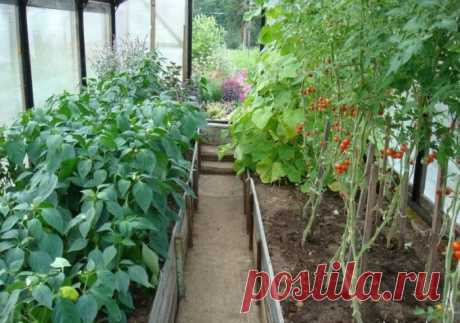 Top dressing of seedling of tomatoes and pepper folk remedies and fertilizers in house conditions. Than to feed up seedling tomato and pepper that were tolstenky?
