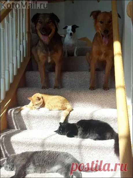 Коты и солнце - день чудесный!