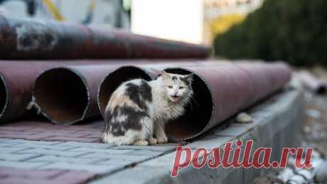 Петербуржцам рассказали, куда обращаться для отлова бездомных кошек Петербуржцы обеспокоились количеством бездомных кошек в городе. В администрации Петербурга рассказали, как жители могут помочь животным.