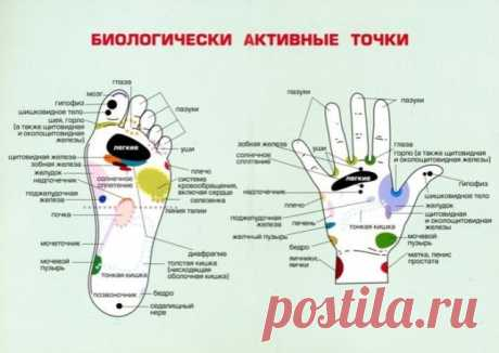 👉👉Полная схема акупунктурных (биологически активных) точек на теле человека 👈👈