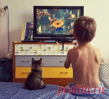 ¡Con una buena tarde! | el Diablo toma Hoy a nosotros levantarán el humor los gatitos entretenidos y simpáticos.