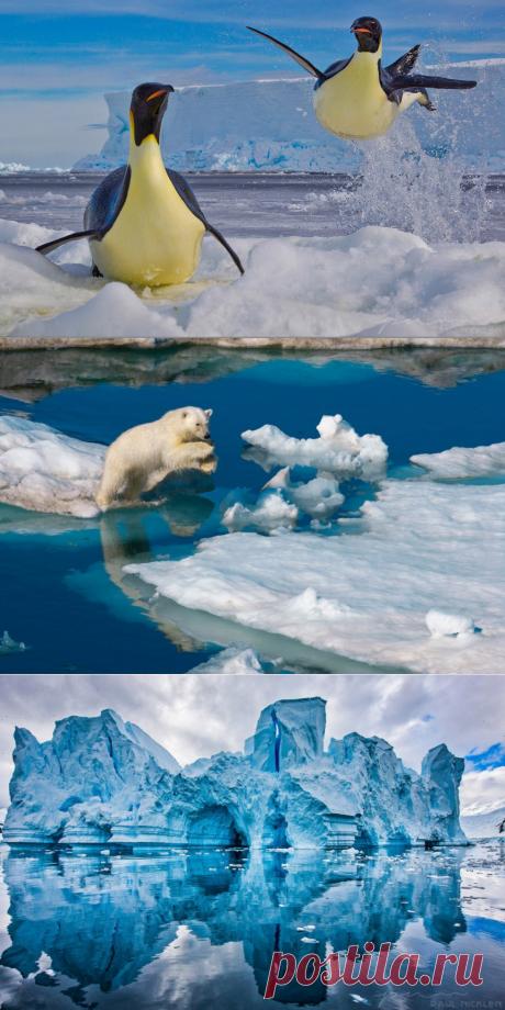 Ледяная красота Полюсов