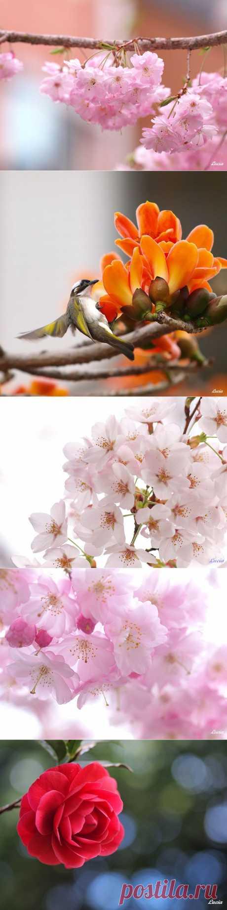 Красивые фотографии птиц и весенних цветов от тайваньского фотографа Lucia Lin   Newpix.ru - позитивный интернет-журнал