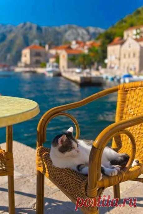 Хочу на место этого кота