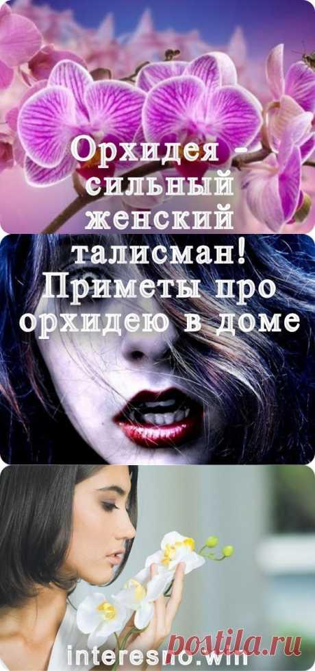 Орхидея-сильный женский талисман! Приметы про орхидею в доме - interesno.win